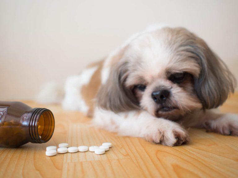 A quoi sert Procox chez les chiens ?
