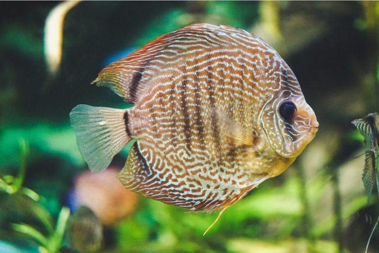 Discuter des soins aux poissons