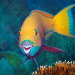 7 curiosités du poisson perroquet