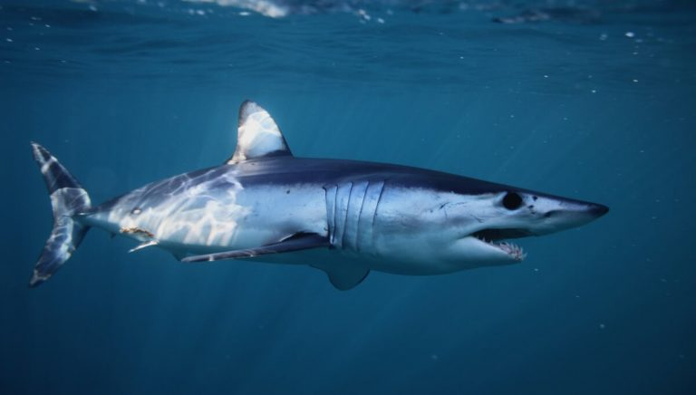 Les 11 animaux les plus rapides de l'océan