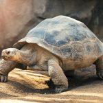 Comportement des tortues