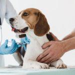 Catosal pour chiens et chats : posologie et effets secondaires