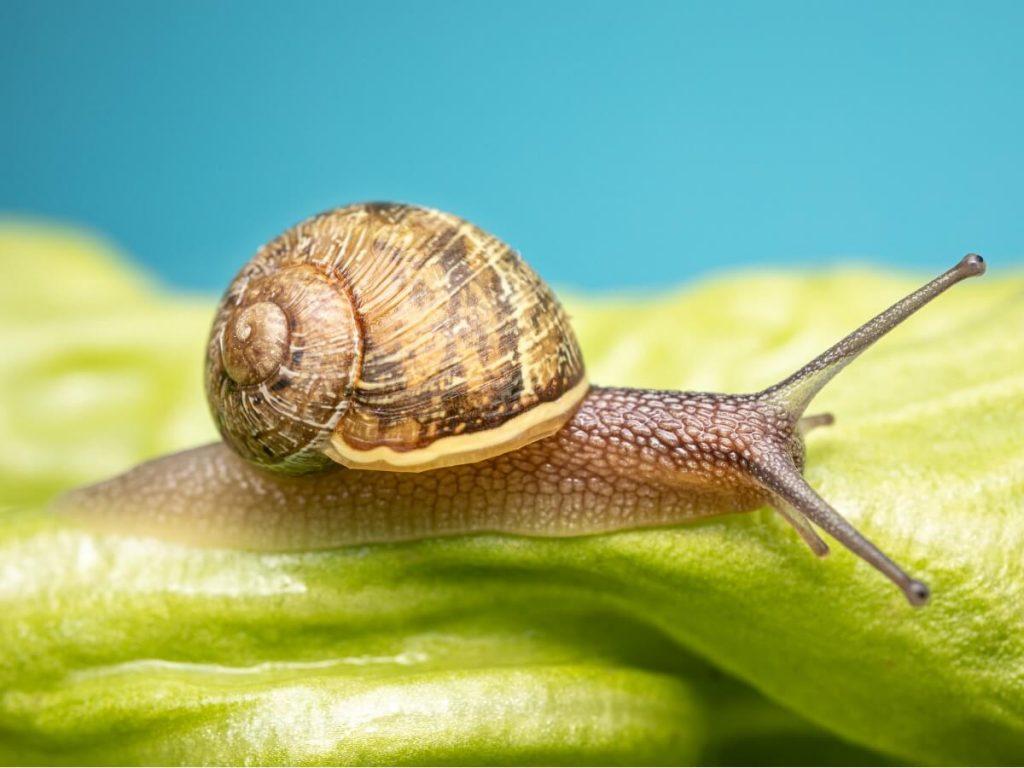 10 curiosités d'escargots qui vous surprendront