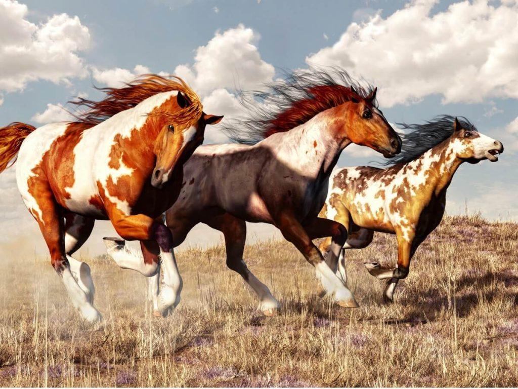 Cheval Mustang : origine et caractéristiques