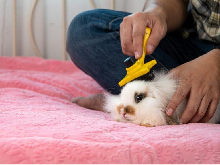 Types de brosses pour lapins