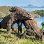 Les 12 animaux les plus dangereux d'Asie