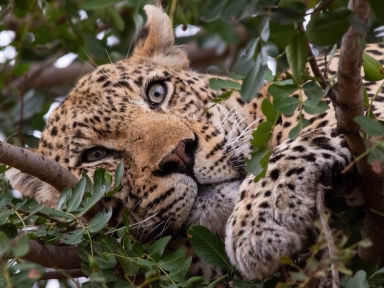25 curiosités sur les chats sauvages