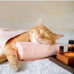 Valériane pour chat : effets et dosage