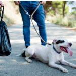 Excréments noirs chez le chien : pourquoi ?