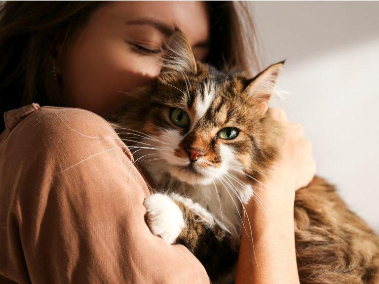 Les chats sont-ils jaloux ?