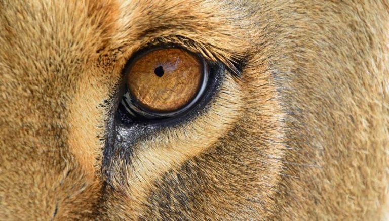 Les 6 mammifères aux sens les plus développés