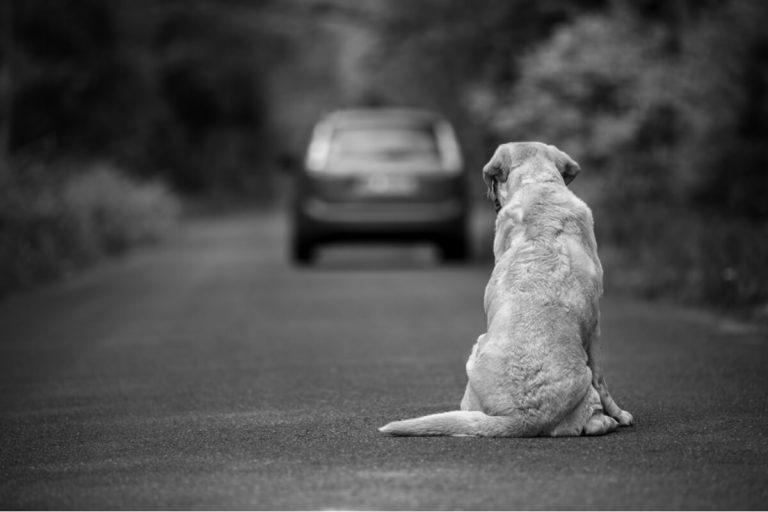 10 façons d'aider un chien abandonné