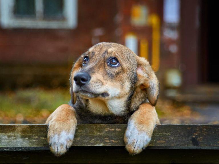 70% des chiens dans le monde vivent abandonnés