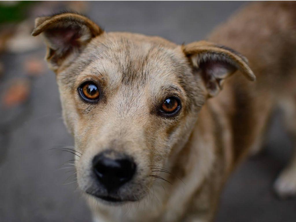 7 faits déchirants sur l'abandon de chien en 2021