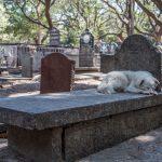 Les chiens peuvent-ils prédire la mort ?