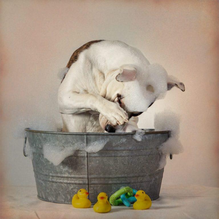Mon chien a mangé du savon : que faire ?