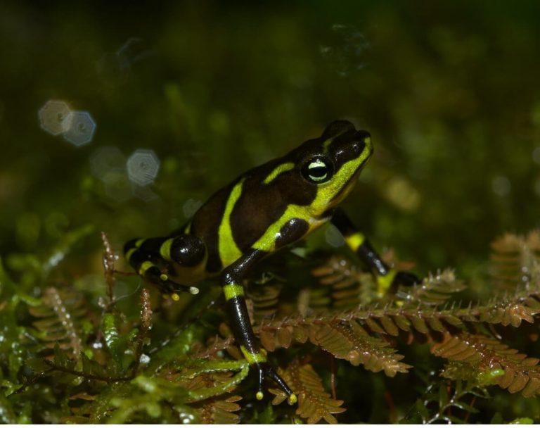 8 types d'amphibiens