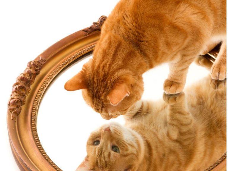 13 races de chats oranges