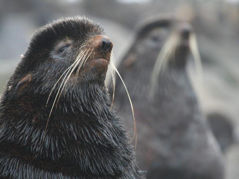 Ours de mer arctique : habitat et caractéristiques