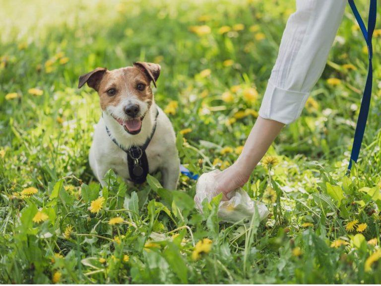 Types d'excréments chez les chiens et ce qu'ils disent de leur santé